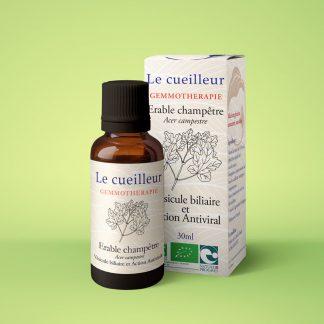 Le cueilleur - Gemmothérapie Erable champêtre