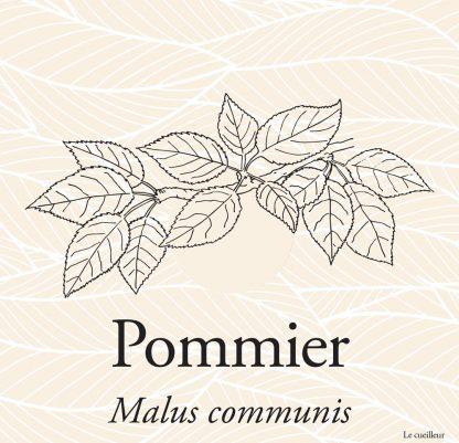 Le cueilleur - Gemmothérapie macerat glycériné de bourgeons de Pommier