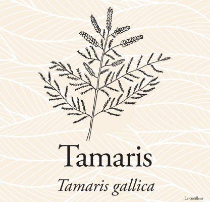 Le cueilleur - Gemmothérapie macerat glycériné de jeunes pousses de Tamaris